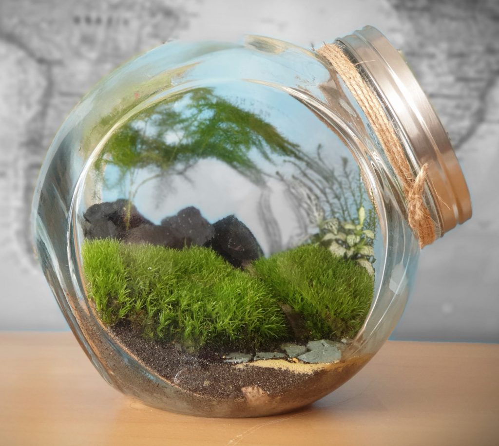 Mountain themed mini-biosphere (closed terrarium), built in a cookie jar