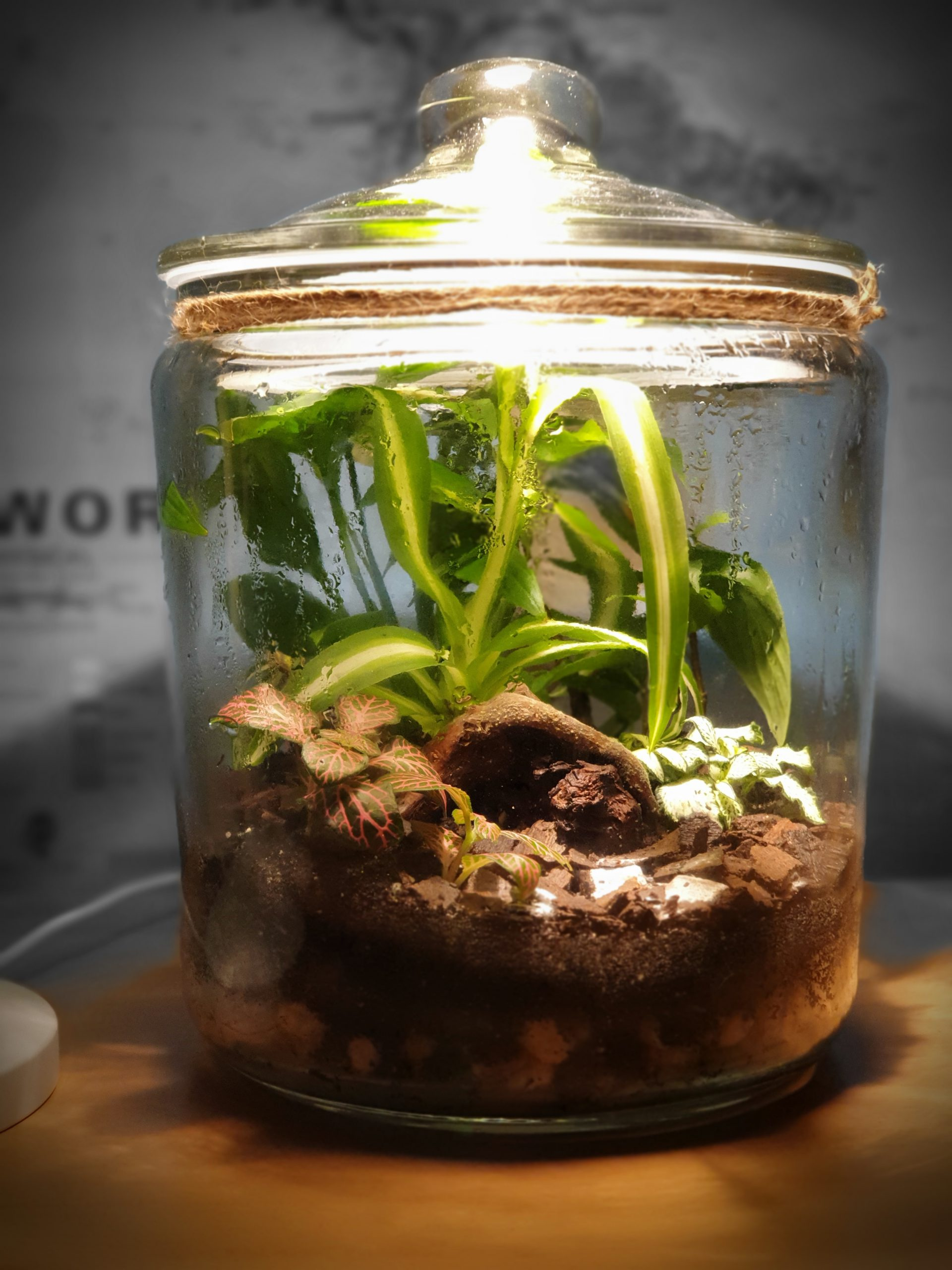 "Closed terrarium ""Amazonia"""