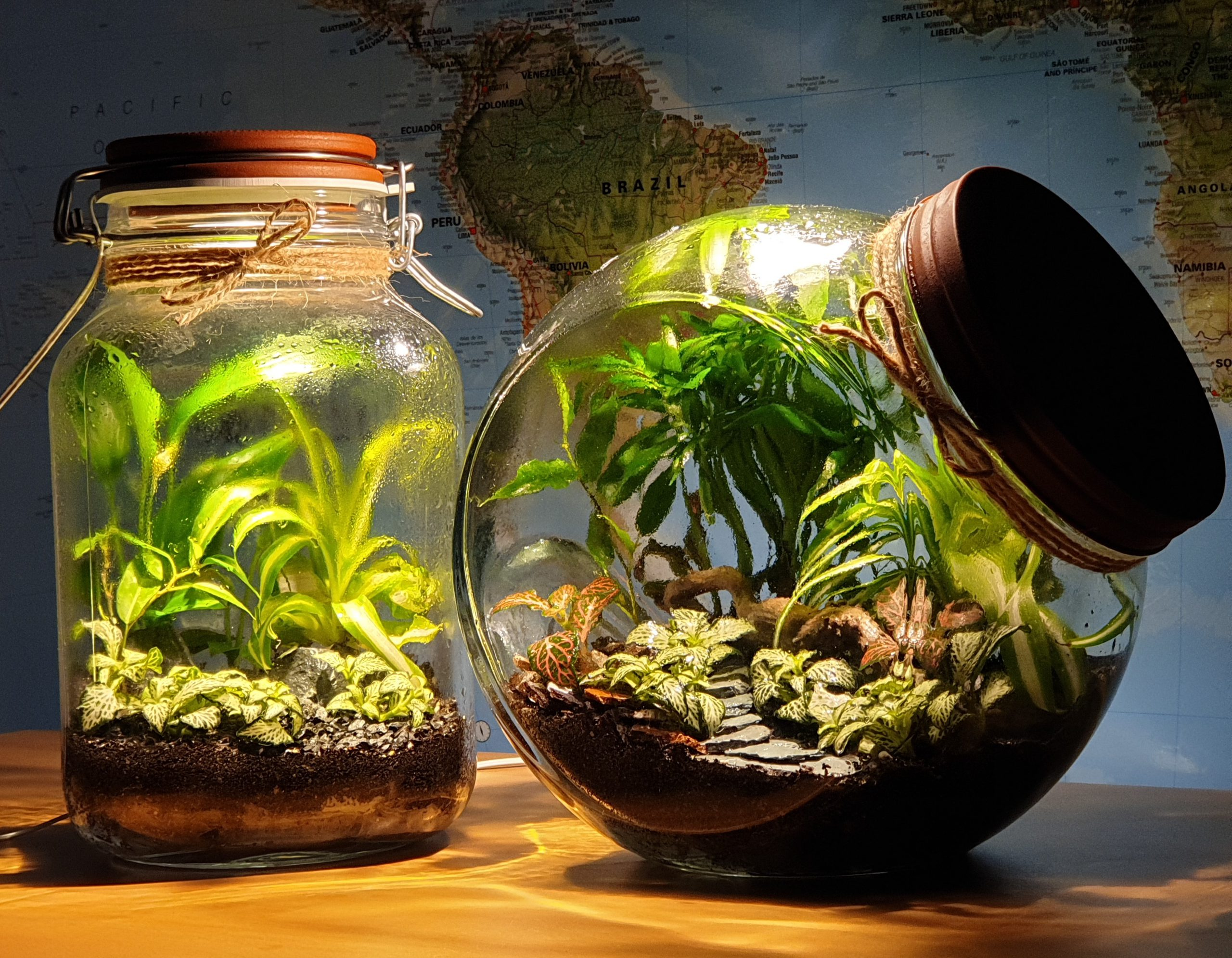Examples of mini-biospheres (closed terrariums), one of which has integrated LED light