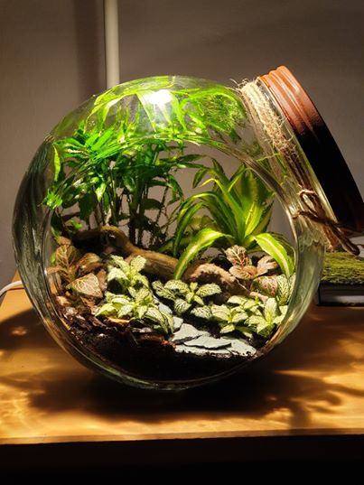 "Closed terrarium ""Eden"""