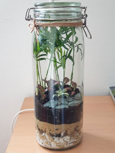 "Closed terrarium ""Java"" without LED light"