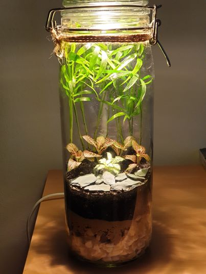 "Closed terrarium ""Java"" with LED light"