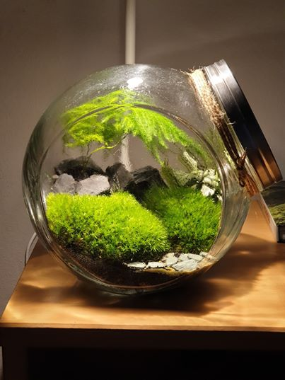 "Closed terrarium ""Fuji"""