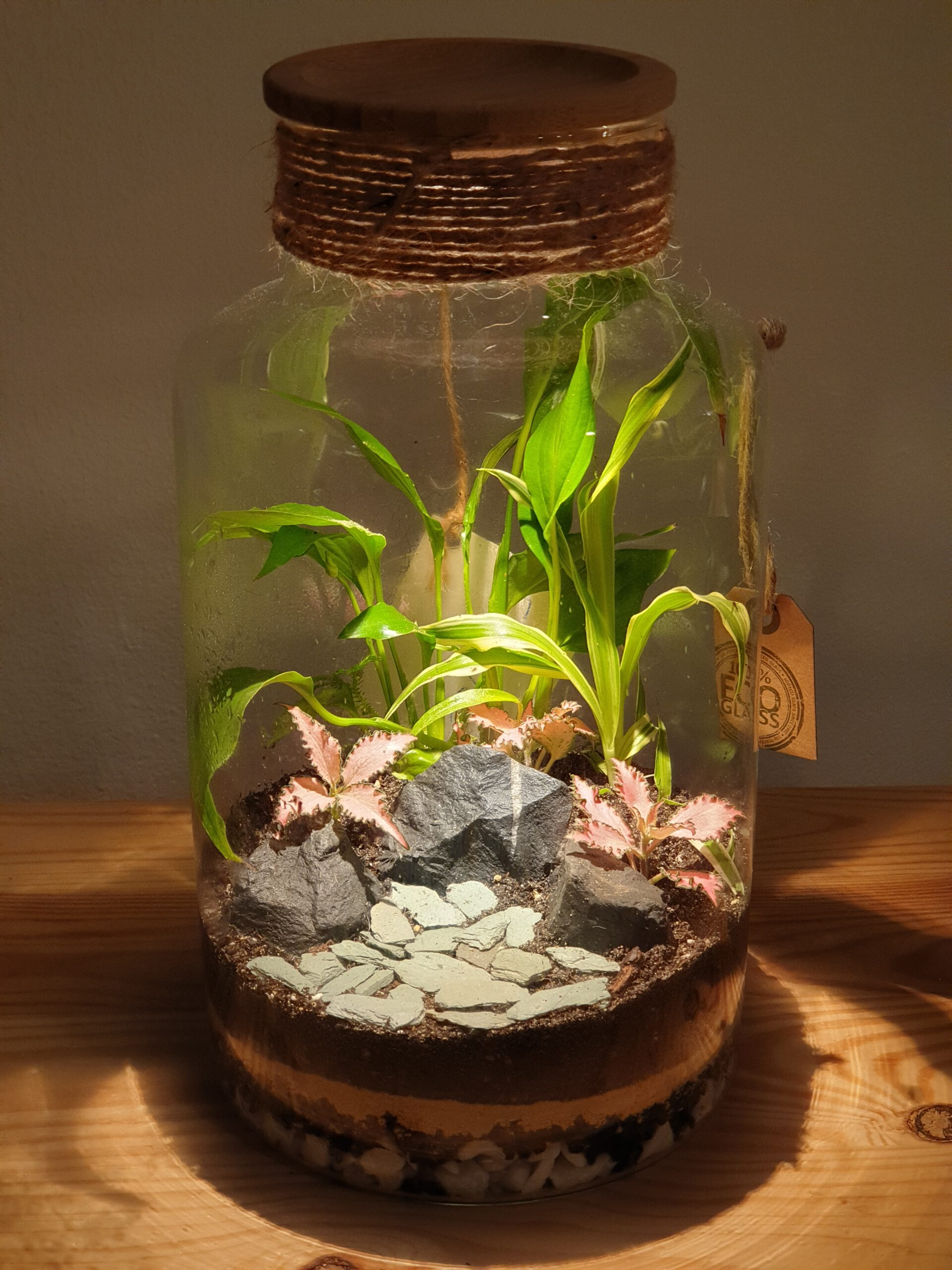 "Closed terrarium ""Nepal"" with LED light"